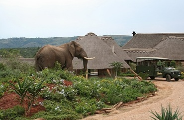 Pumba Private Game Reserve, malaira free Eastern Cape, Sough Africa