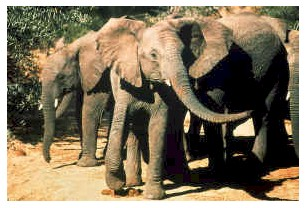 Addo Elephant Park Eastern Cape South Africa